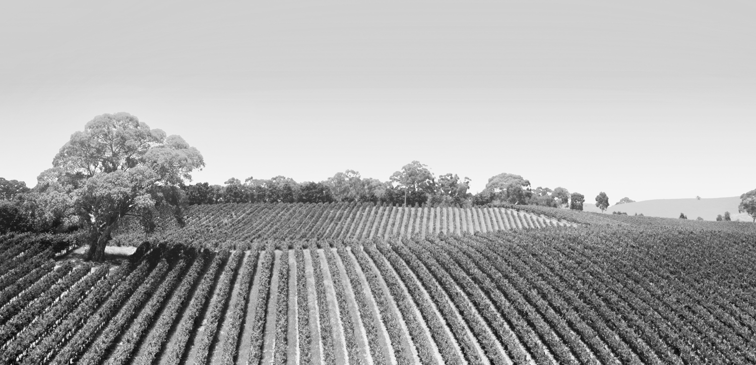 grape_vines_banner